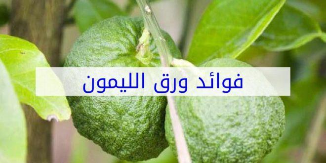 صور فوائد ورق الليمون , الفوائد الطبية لورق الليمون