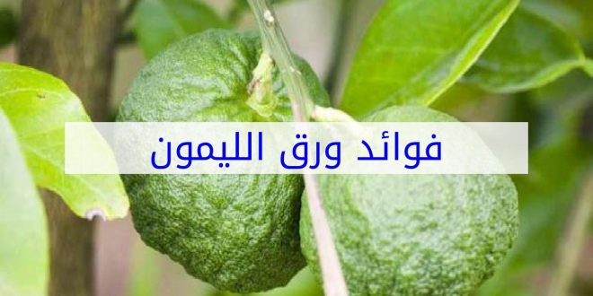صورة فوائد ورق الليمون , الفوائد الطبية لورق الليمون