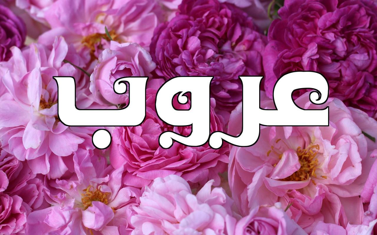 صور ما معنى اسم عروب , شرح معني اسم عروب بالمعجم العربي