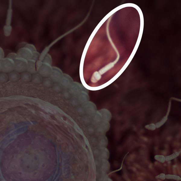 صور صور تطور الجنين , شاهد بالصور نمو الجنين برحم الام