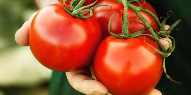 صورة تفسير حلم البندورة , معني رؤية الطماطم في المنام