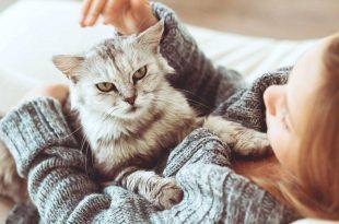 صور مرض القطط للبنات , مخاطر تربية القطط للبنات