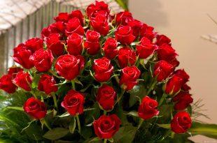 صور ورود حمراء جميلة , اتفرج علي احلي الورود