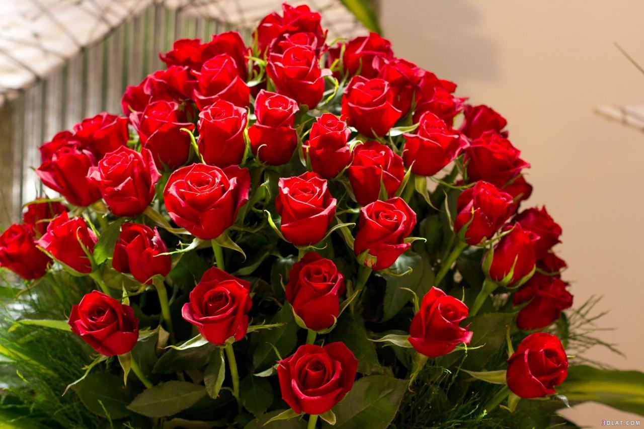 ورود حمراء جميلة اتفرج علي احلي الورود حنان خجولة