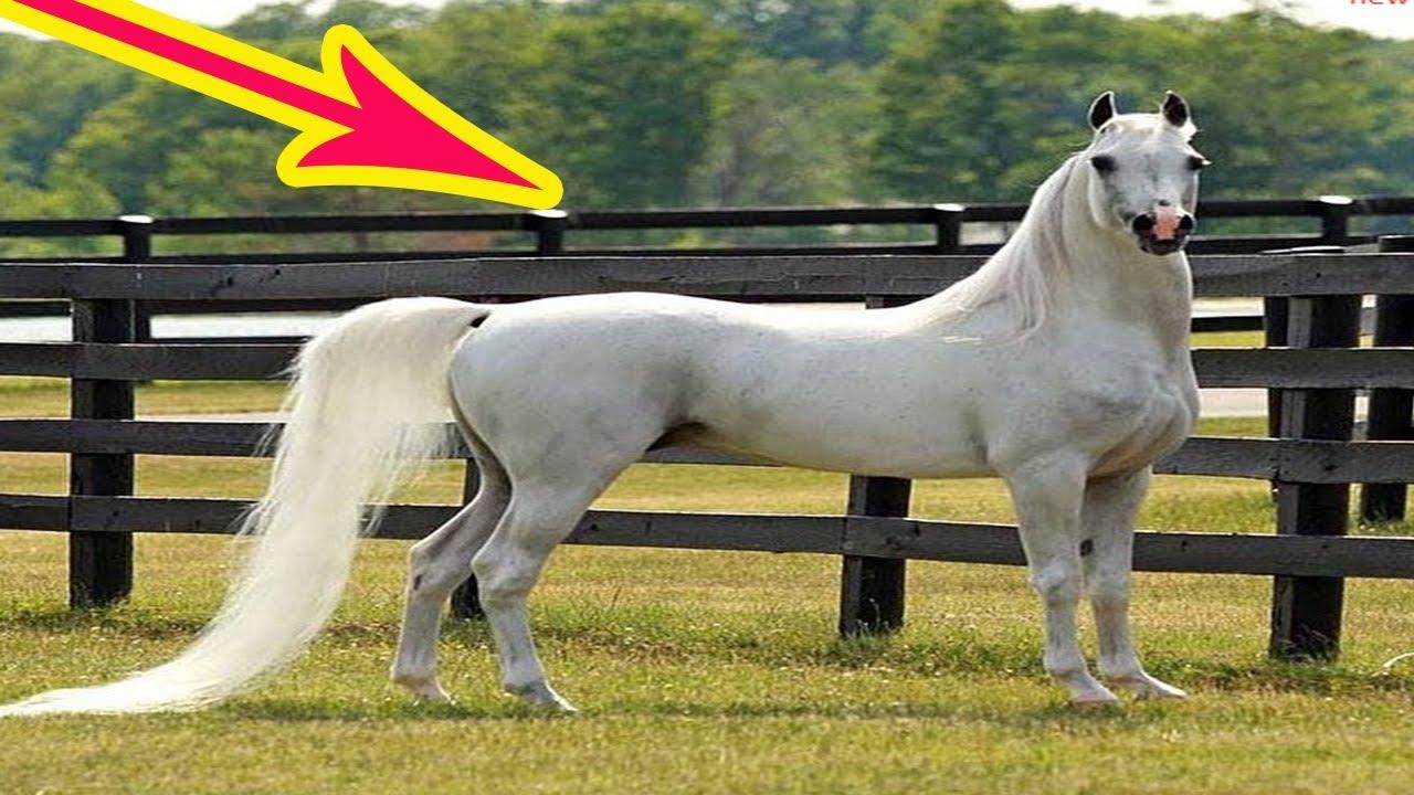 نفوق حصان عربي أصيل ثمنه 3