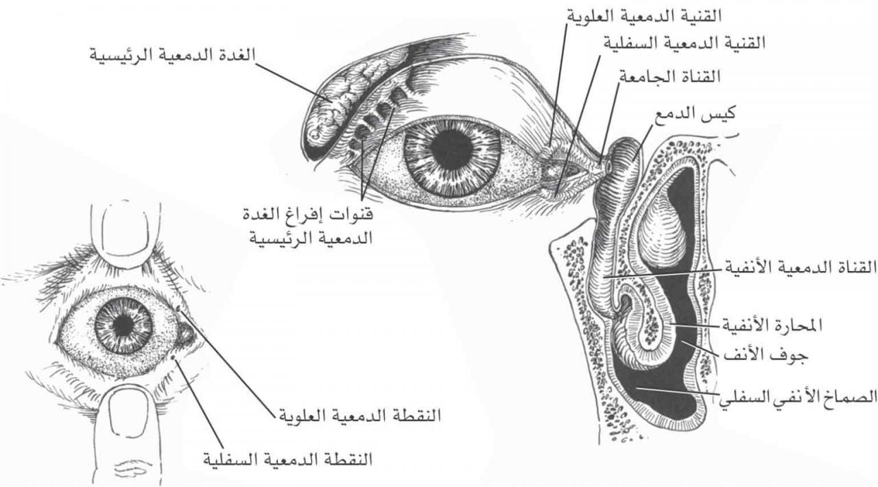 صورة لماذا دموع العين مالحة , سر ملوحة دموع العين