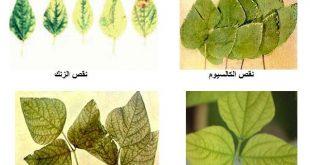 اعراض نقص البوتاسيوم في النبات , عنصر مهم لكل نبات حتى يستطيع النمو