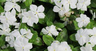صورة نباتات بحرف و , اغرب انواع النباتات