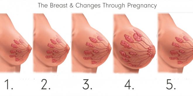 صورة انواع حلمات الثدي , اختلاف حجم الثدي