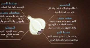 صورة طريقة اكل الثوم , فوائد الثوم