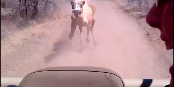 صورة ما هو احقد الحيوانات , حيوان على قد تحمله الا انه عنيد ولابد ان ينتقم