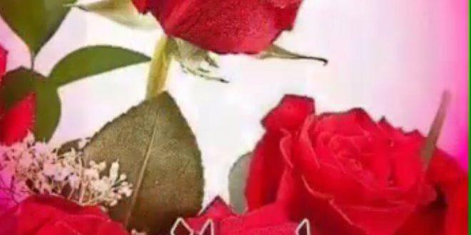 صورة شعر مساء الورد , اشعار لاجمل امسية
