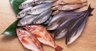 صورة حلمت اكل سمك , السمك وتفسيراته في المنام
