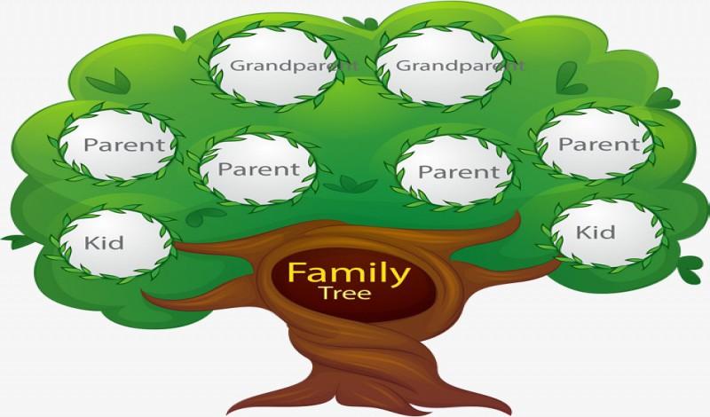 صورة كيف ارسم شجرة العائلة , تعلم طريقة سهلة لمعرفة شجرة عائلتك 3568 1