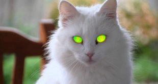 صورة اجمل قطط بالعالم , شاهد مالا تعرفه عن الحيوانات الاليفه