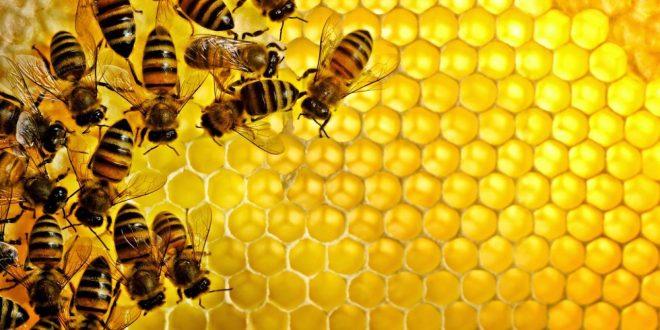 صورة فوائد عسل النحل , اهم فائدة في عسل النحل