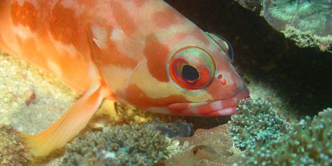 صورة هل ينام السمك , كيف تنام الاسماك