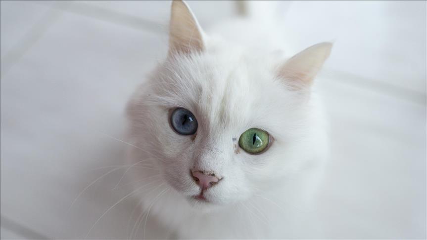 صورة احلى صور للقطط , خلفيات لمحبيين القطط
