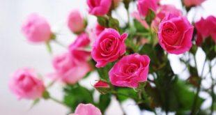 صورة تفسير الورد في الحلم , الورد ما بين الواقع و الحلم 5525 1 1 310x165