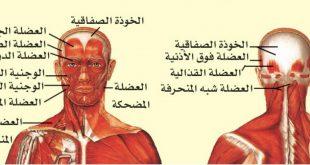 صورة اعراض التوتر العصبي في الراس , الم مستمر او متقطع في الراس لكن فظيع قوي