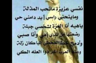 صورة قصائد عن الصقر , طائر من الطيور الجارحة لكن له اهمية في حياة العرب
