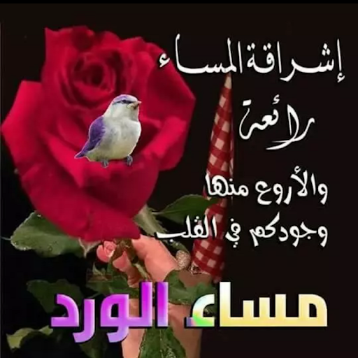 صورة قصايد مساء الخير , احلى كلمات في الليل لكل حبايب قلبي
