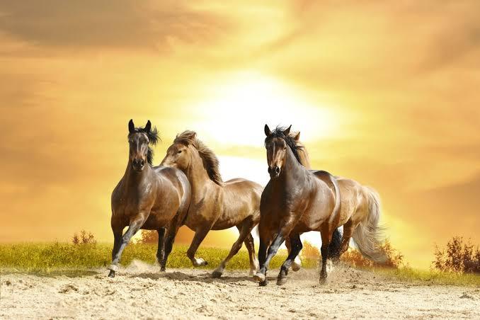 صورة الحصان البني في المنام للعزباء , تفسيرات للخيل في احلام الفتيات