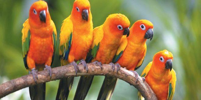 صورة في المنام طيور , كيف يفسر رؤية الطير في المنام