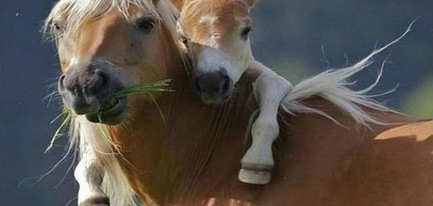صورة المهرة في المنام , ماذا يعني الحصان الصغير في الحلم