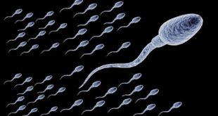 ضعف حركة الحيوان المنوى , حتى يحدث الحمل باذن الله تاكد من امر ما