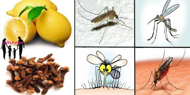 صورة علاج الناموس في البيت , حيل ذكية للتخلص من الناموس