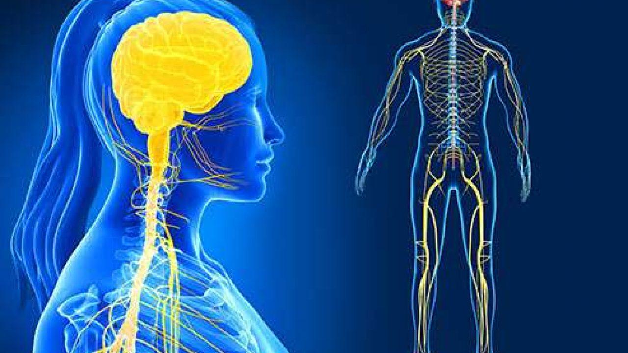 صورة مكونات الجهاز العصبي , تعرف على رئيس ادارة جسمك