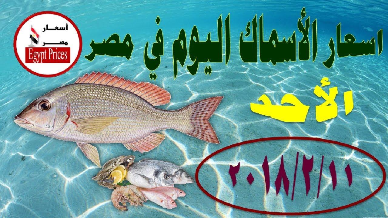 صورة وادى النيل للاسماك , بعض العلومات عن اسماك النبل 2578 1