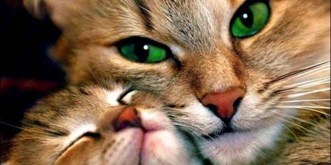 صورة صور قطط hd,اجمل صور للقطط اضغط هنا