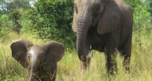 صورة اسم ولد الفيل , اسم لا يخطر على البال لهذا الحيوان الصغير