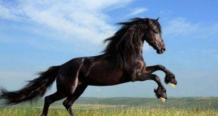 صورة كم يعيش الحصان , تعرف على العمر الحقيقى للحصان