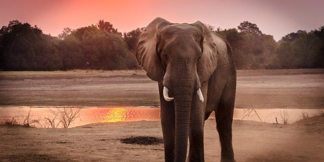 صورة تفسير الاحلام فيل , معني رؤية الفيل في الحلم