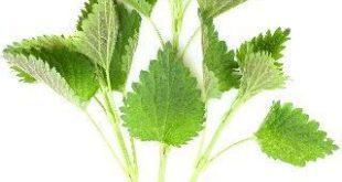 صورة هذه الأعشاب سوف تقوي صحتك , انواع الاعشاب وفوائدها