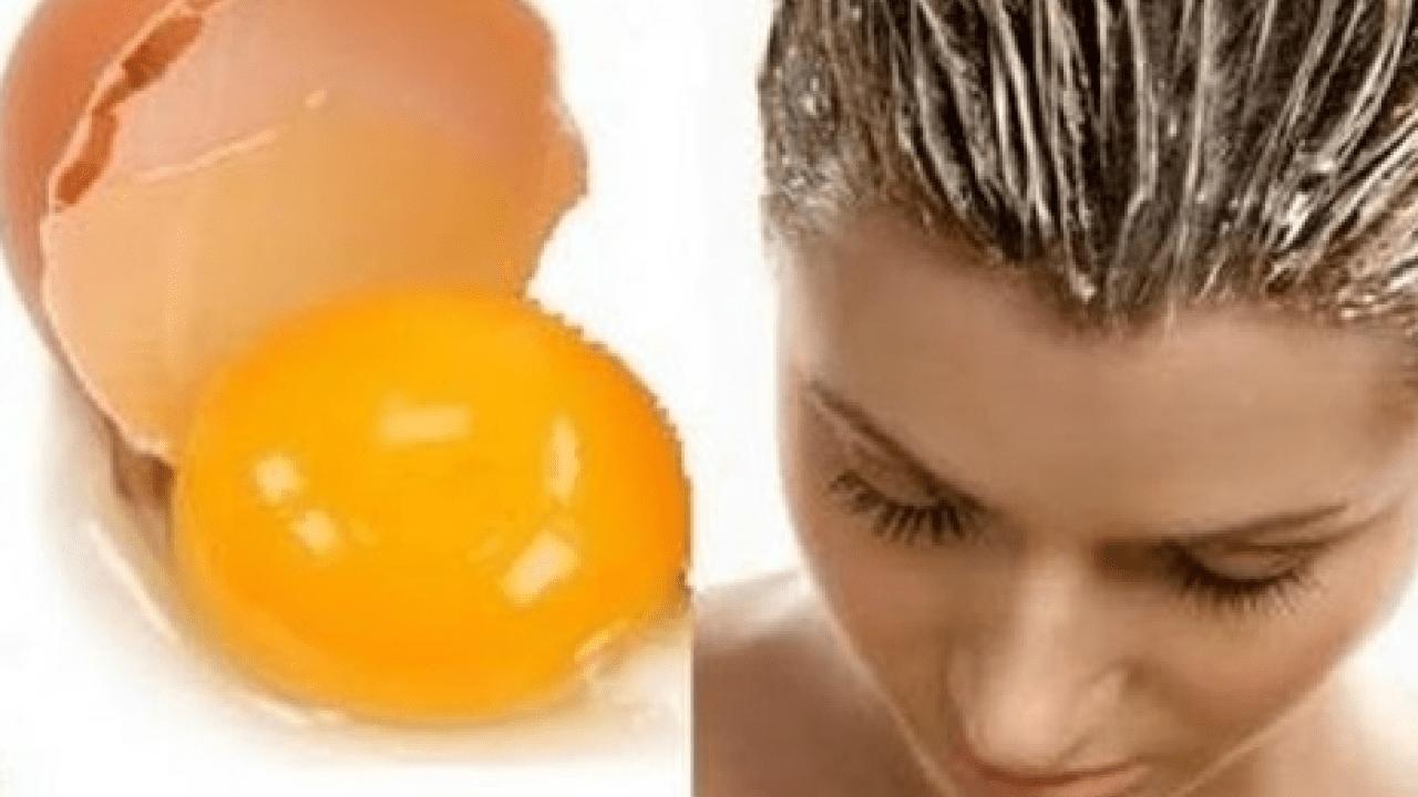 صورة خلي شعرك متغذي مع صفار البيض , فوائد صفار البيض للشعر