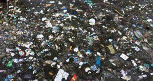 صورة بحث عن البيئة , معولمات مهمة جداً يجب معرفتها unnamed file 161 310x165